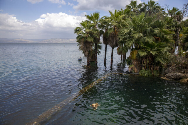 In this Saturday, April 25, 2020 photo, a dog swims in the water as trees stand where dry land was in the Sea of Galilee, locally known as Lake Kinneret. After an especially rainy winter, the Sea of Galilee in northern Israel is at its highest level in two decades, but the beaches and major Christian sites along its banks are empty as authorities imposed a full lockdown. (AP Photo/Ariel Schalit)